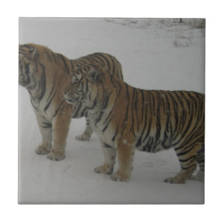Hi-Res Two Siberian Tigers Tile
