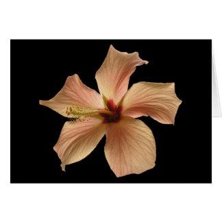 Hibiscus #4 card
