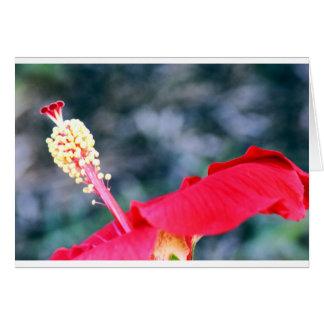 Hibiscus 4 card