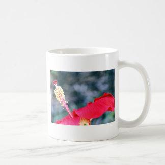 Hibiscus 4 coffee mugs