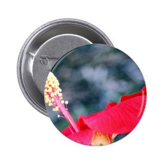 Hibiscus 4 pinback button