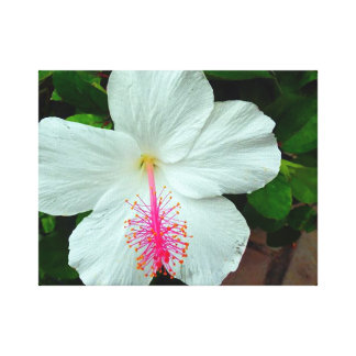 Hibiscus Canvas Wall Art