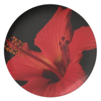 Hibiscus Detail Party Plate