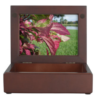 "Hibiscus ""Fire and Ice"" Plant Memory Boxes"