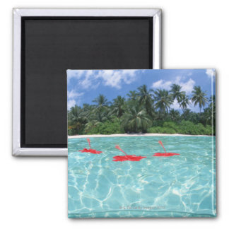 Hibiscus floating on the sea square magnet
