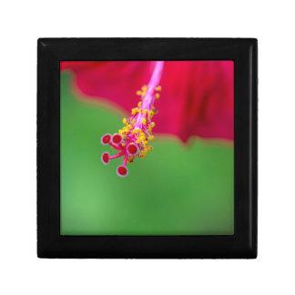 hibiscus gift box