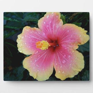 Hibiscus Hawaiian Flower Plaque
