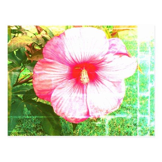 Hibiscus Photograph Postcard