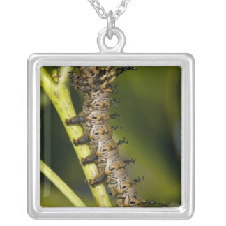 Hickory horned devil caterpillar (Citheronia Silver Plated Necklace