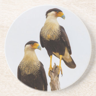 Hidalgo County. Adult Crested Caracara Coaster