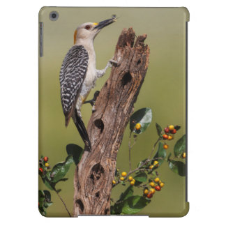 Hidalgo County, Texas. Golden-fronted Woodpecker 1 Cover For iPad Air