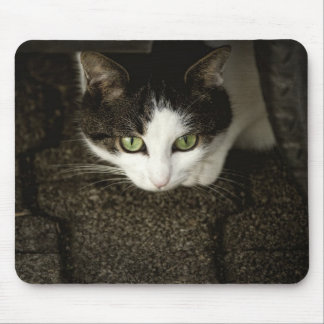 Hidden Cat Mouse Mat