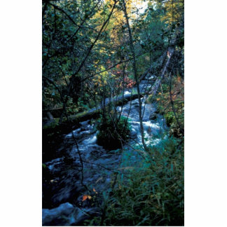 Hidden Creek in Fall Colors Cut Out