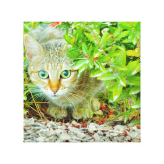 Hidden Domestic Cat with Alert Expression Canvas Print