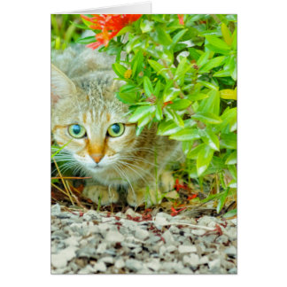Hidden Domestic Cat with Alert Expression Card
