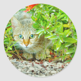 Hidden Domestic Cat with Alert Expression Classic Round Sticker