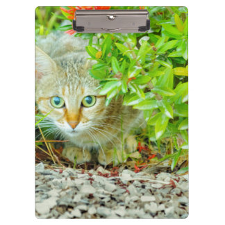 Hidden Domestic Cat with Alert Expression Clipboards