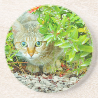 Hidden Domestic Cat with Alert Expression Coaster
