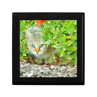 Hidden Domestic Cat with Alert Expression Gift Box