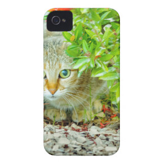 Hidden Domestic Cat with Alert Expression iPhone 4 Cases