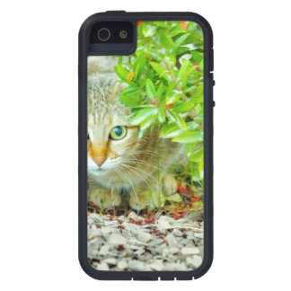 Hidden Domestic Cat with Alert Expression iPhone 5 Cases