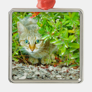Hidden Domestic Cat with Alert Expression Metal Ornament