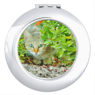 Hidden Domestic Cat with Alert Expression Mirror For Makeup