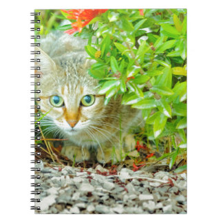 Hidden Domestic Cat with Alert Expression Notebooks