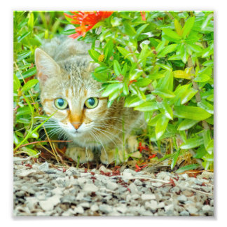 Hidden Domestic Cat with Alert Expression Photo Print