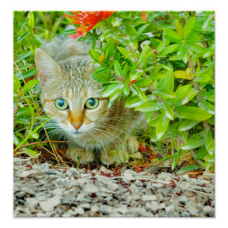 Hidden Domestic Cat with Alert Expression Poster