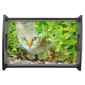 Hidden Domestic Cat with Alert Expression Serving Tray