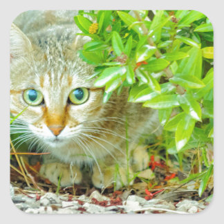 Hidden Domestic Cat with Alert Expression Square Sticker