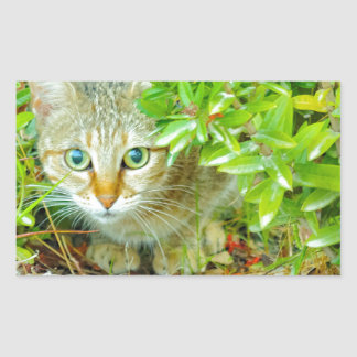 Hidden Domestic Cat with Alert Expression Sticker