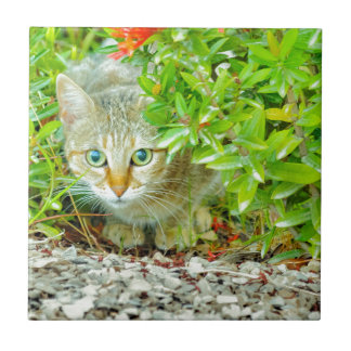 Hidden Domestic Cat with Alert Expression Tile