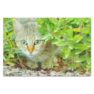 Hidden Domestic Cat with Alert Expression Tissue Paper