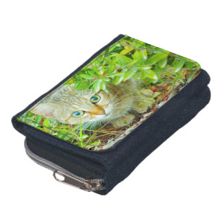 Hidden Domestic Cat with Alert Expression Wallets