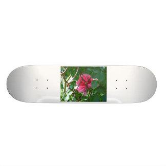 Hidden Gem Skateboard Deck