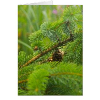 Hidden Pine Cone Greeting Card