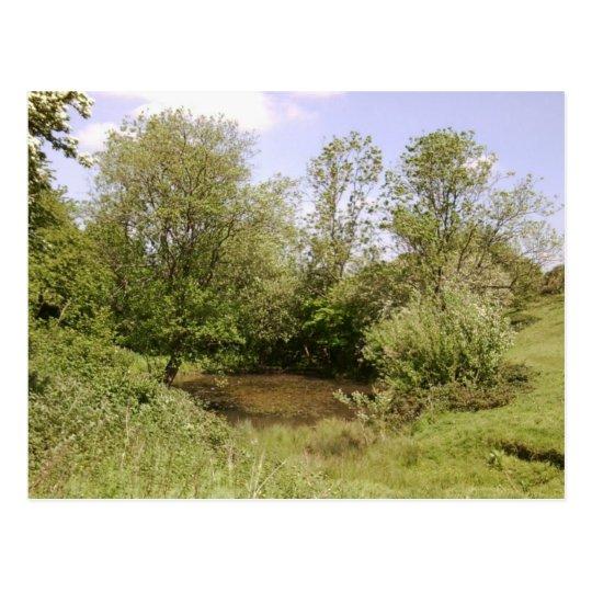 Hidden Pond Photo Postcard