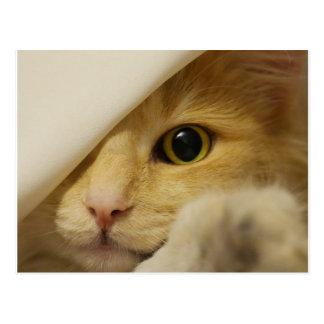 Hide and Seek Kitten under Blanket Postcard