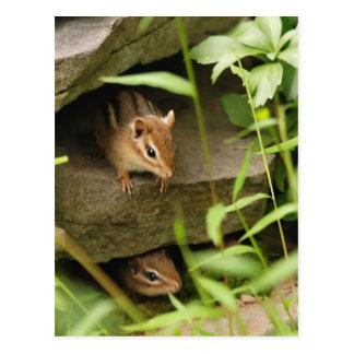 Hide & Seek Baby Chipmunk Siblings Postcard