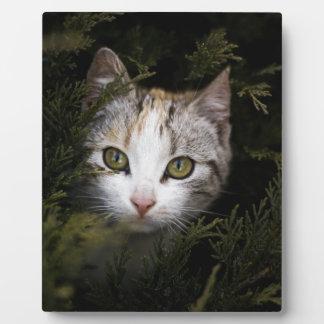 Hiding Kitten Plaque