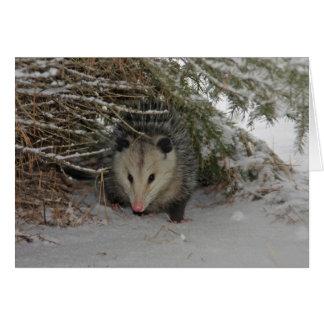 Hiding Possum Card