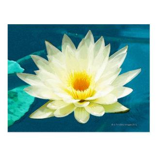 High angle view of a lotus postcard