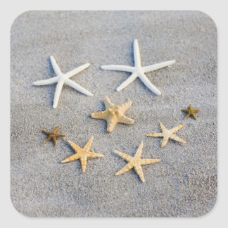 High angle view of a starfish on the beach square sticker