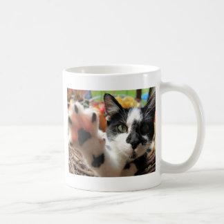 """High Five"" Cute Cat Photo Coffee Mug"