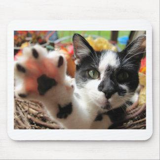 """High Five"" Cute Kitty Cat photo mousepad"