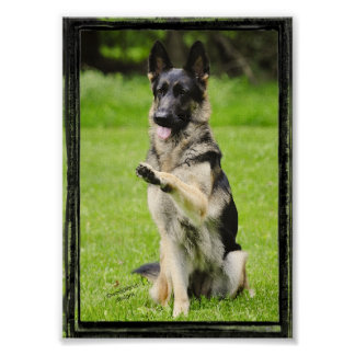 High Five German Shepherd Poster