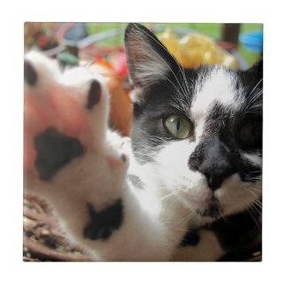 """High Five"" Kitty Cat small square tile"