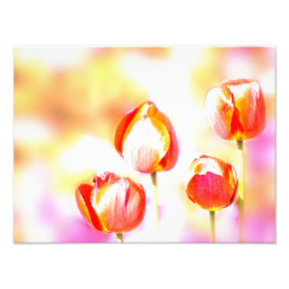 High Key Red Tulip Flower Quartet Photo Print